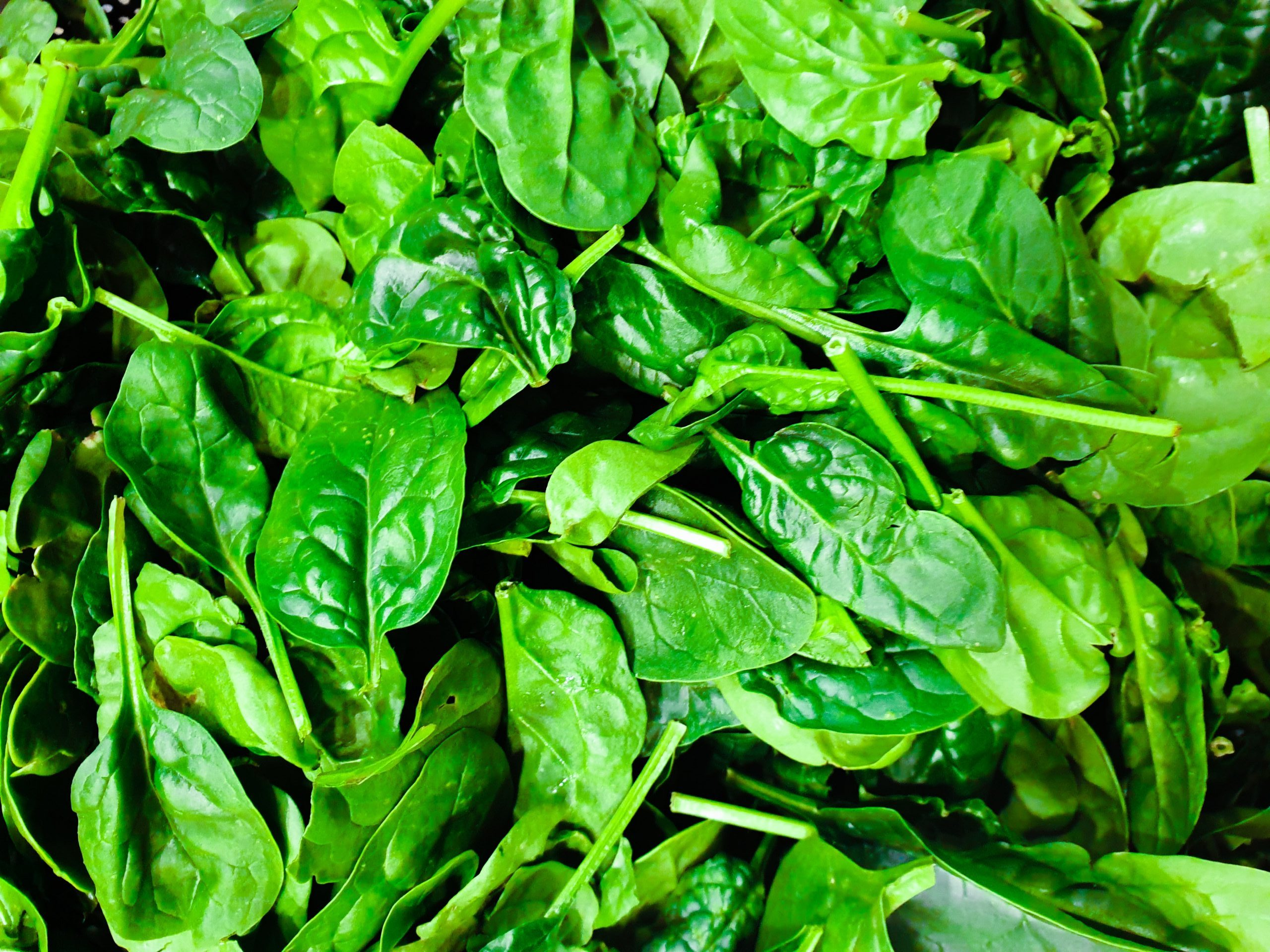Spinach vegetable Which Boost Immunity